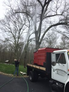 tree spraying arborist