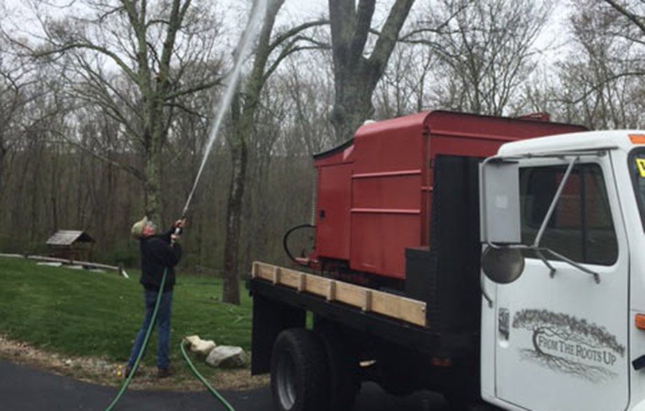 Gypsy Moth Control Killingly CT, Brooklyn CT, Plainfield CT