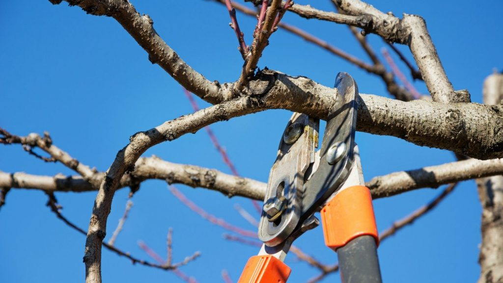 Tree Services Storrs CT, Willimantic CT