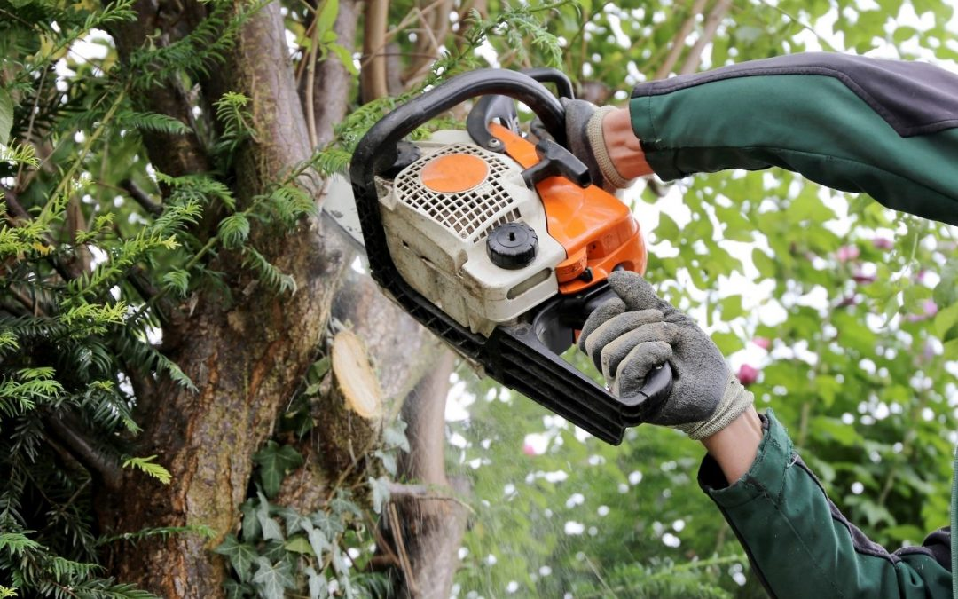 Tree Removal Windham County CT