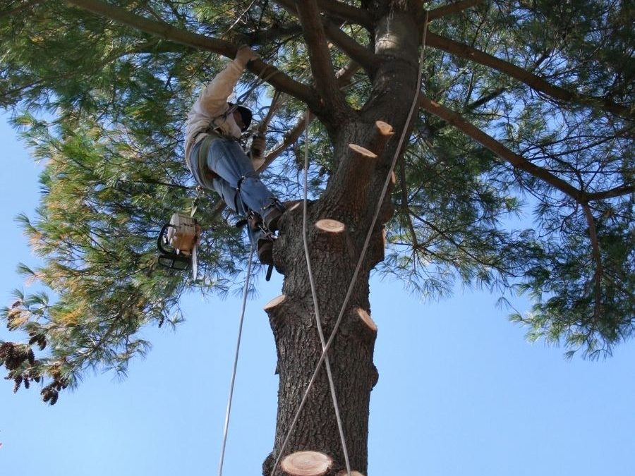 Tree Removal Tolland County CT